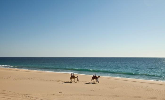 Camel Ride Cabo San Lucas